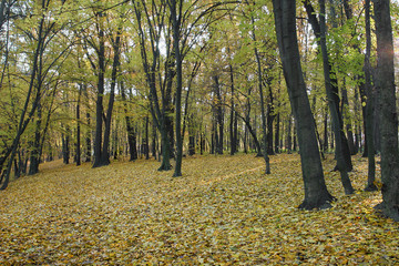 Autumn forest. The concept of lumber, furniture and wood product