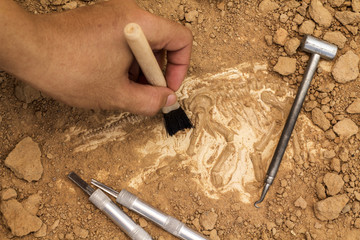 Skeleton and archaeological tools.Training for dig fossil.