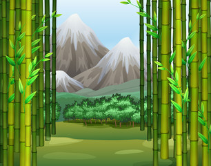 Bamboo jungle with mountains background