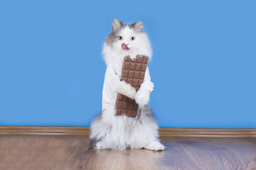 Cat loves to eat chocolate