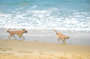 Two pets playing near sea, dogs beach