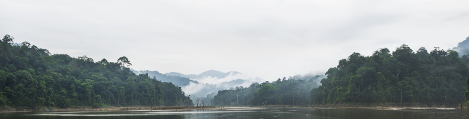Panorama view of morning fog and dead trees in dense tropical rainforest, Perak, Malaysia