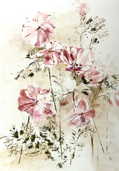 Stylized aquarelle drawing of Cosmos flowers