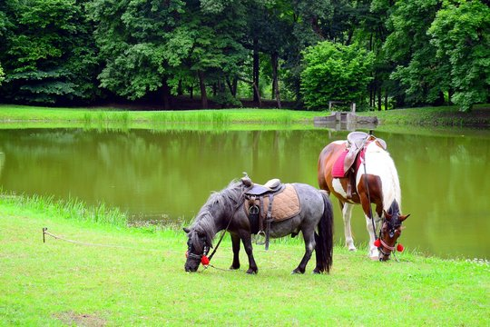 Ponds of Panemune old castle ensemble and horses