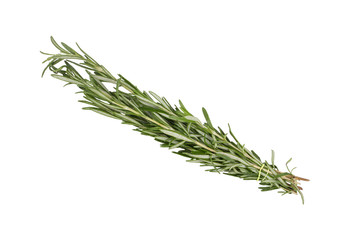 Branch of rosemary close up on white background