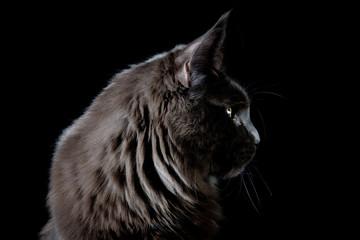 Black cat loooking a side