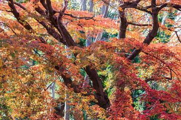 秋のお寺の紅葉景色