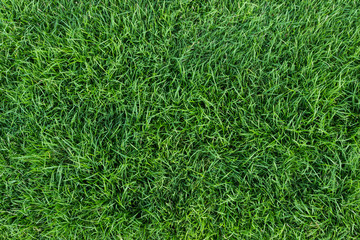 Canvas Prints Grass green grass texture