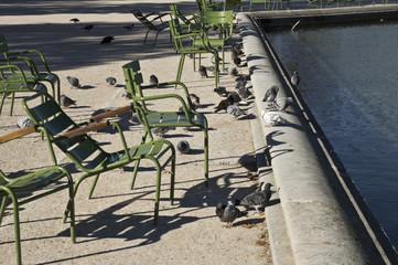 pigeons au jardin des Tuileries, Paris, France