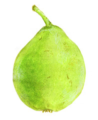 Pear. Hand-drawn fruit. Real watercolor drawing.