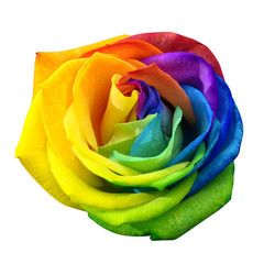 Fototapete - Rainbow rose or happy flower isolated by clipping path