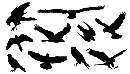 falcon silhouettes Fototapete