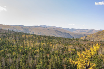Far Eastern taiga. 