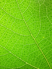 Closeup of green leaf pattern