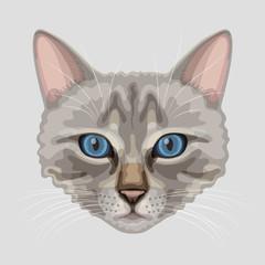 Drawn cat muzzle