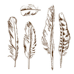 Hand drawn different types of birds feather