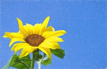sunflower  - illustration based on own photo image