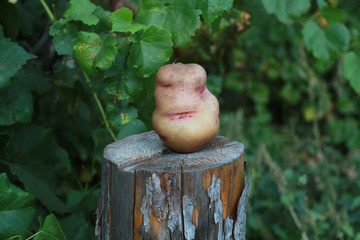 Potatoes on the stump. Flirtatious woman's face at the root of p