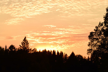 Altocumulus Clouds and Tree Silhouettes at Sunset