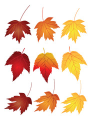 Maple Leaves in Fall Colors Vector Illustration
