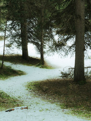 Forest path in the snow in vintage style. South Tyrol. Italy