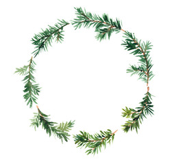 Spruce wreath. Watercolor