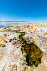 Colorful hot spring on the Andes, Bolivia