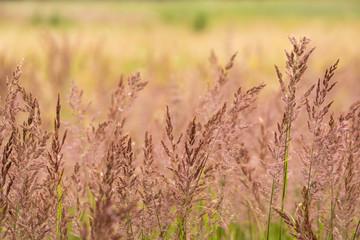 Fototapeta słoneczna trawa obraz