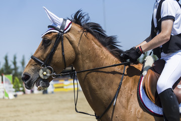 Close up of the horse during competition matches riding round ob
