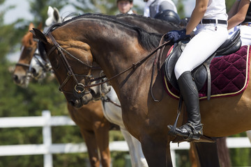 Close up of the rider on a horse during competition matches ridi