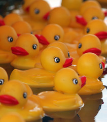 Rubber Duck in Profile with Friends