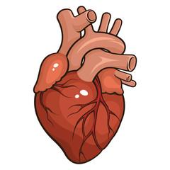 Human heart 001
