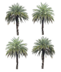 four palm trees collection isolated on a white background with c