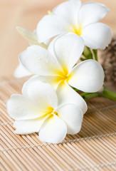 white Plumeria on wood bamboo mat.
