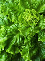 Green Ripe Lettuce