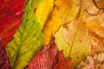texture de feuilles mortes à l'automne en gros plan