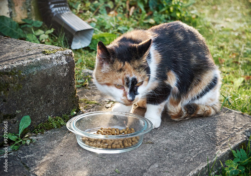 stop cat from peeing on clothes