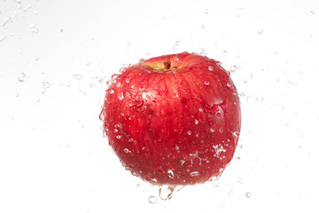 林檎 サンつがる シズル感
