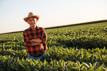 Portrait of senior farmer in a field examining crop