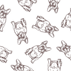Pattern Dogs