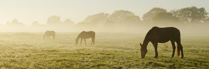 Fototapeten Pferde Verschwinden im Morgennebel