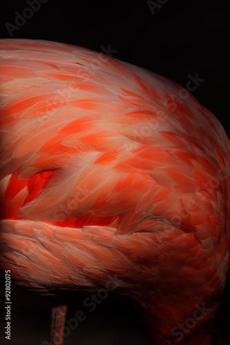 rosado americano