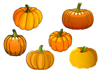 Orange pumpkin vegetables in cartoon style