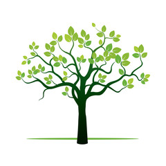 Spring Tree and Green Leafs. Vector Illustration.