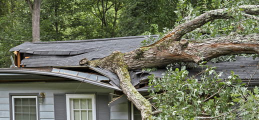 Poster Onweer Storm Fells Tree Destroying a House Roof