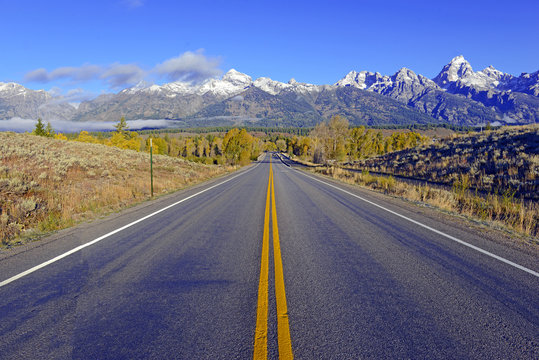 Driving into Grand Teton National Park showing Aspen trees with golden yellow foliage, Wyoming, America
