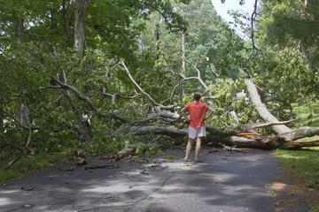 Storm Fells Tree Blocking the Road and Pedestrians