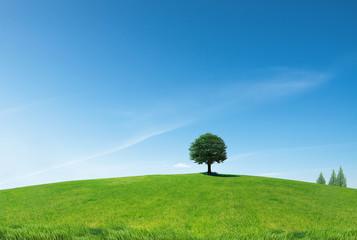 나무와 언덕 Fotobehang