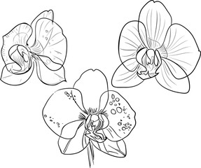 Coloring with orchids