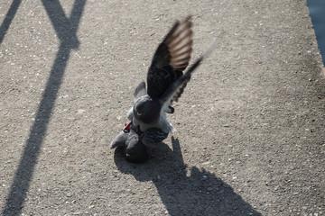 Vogel sorgt für nachwuchs